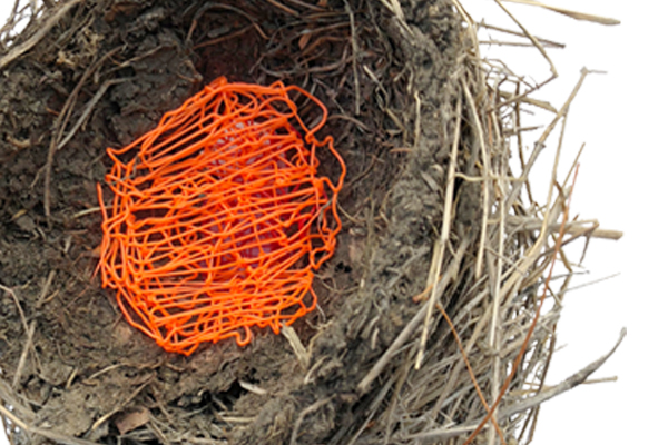 detail of bird's nest with orange plastic strands woven into center